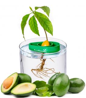 Suport pentru crescut avocado