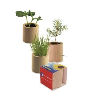 Planta – lemn rotund