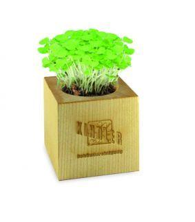 Planta – lemn maxim
